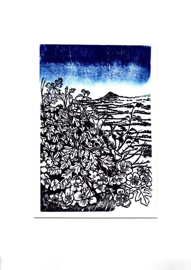 Past Hawthorns (Blue 1)
