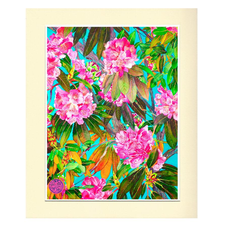 Rhododendron- Hendorgor