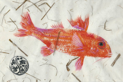 1 Red Mullet Shallow Dive