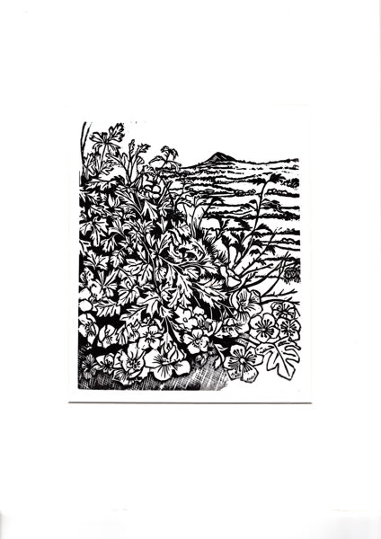 Past Hawthorns (Black & White) On Watercolour Paper